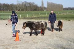 Pony Power voor Kids
