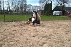 Lessen met paarden