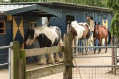 drie-paarden